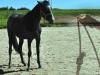 horse-seil
