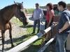 pferd-mensch-training