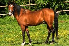 Trainings-Partner Pferde